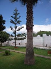 Foto 9 animales y mascotas en Santa Cruz de Tenerife - Residencia Canina Mirabal