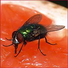 Aparatos mata insectos