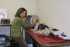 Clinica calzada veterinaria. huge en sesion de electroestimulacion