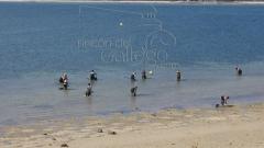 Mariscadoras con horquilla en illa de arousa www.rincondelgallego.com