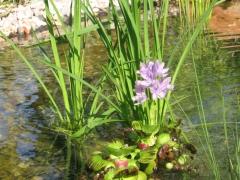 Mantenimiento de estanques