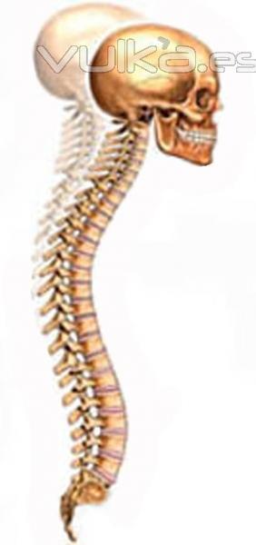 La clínica para el tratamiento de la columna vertebral chelyabinsk