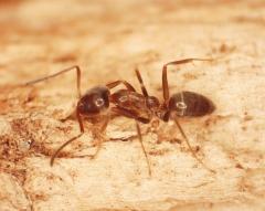Pest control  lateristesta - foto 5