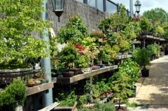 Vistas del jard�n-vivero del centro bons�i colmenar