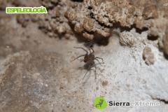 Sierra extreme - foto 22
