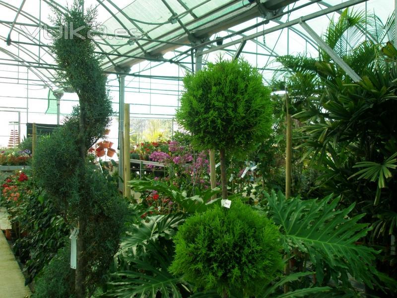 Foto invernadero de plantas ornamentales del bot nico Plantas de invernadero