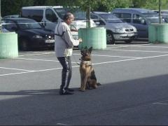 Foto 4 animales y mascotas en Navarra - Yoga Canino