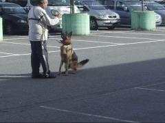 Foto 18 animales y mascotas en Navarra - Yoga Canino