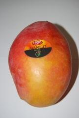 Mangos de m�laga, madurados en el �rbol