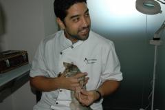 Clinica calzada veterinaria y rehabilitacion. arturo calzada forés. veterinario rehabilitador