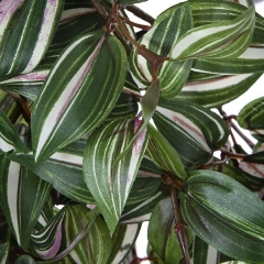Plantas colgantes artificiales. planta artificial colgante tradescantia en lallimona.com (detalle 2)