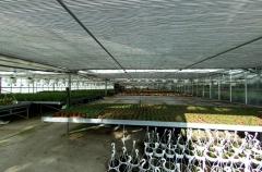 Pantalla t�rmica interior en invernadero