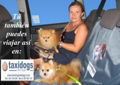 Taxidogsmalaga.com