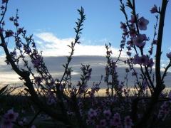 Arboles en floración