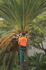 Podador de palmeras
