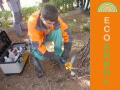 Tratamiento procesionaria del pino