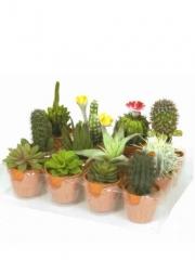 Macetitas cactus artificiales. oasisdecor.com cactus decorativos
