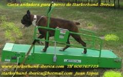Cinta andadora de starkerhund-iberica