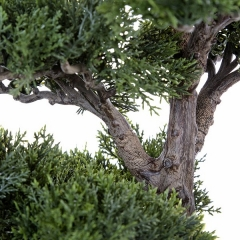 Plantas artificiales. bonsai artificial cedro 65 en lallimona.com (2)