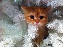 El �rbol de navidad tambi�n es de cata