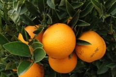 Nuestras naranjas