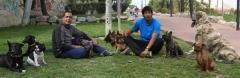 Adiestramiento canino en alicante y castellón