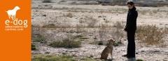 Adiestramiento en obediencia básica de perros