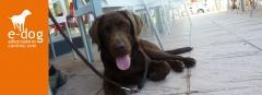 Socialización y educación de cachorros en alicante y castellón