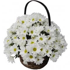 Sencillas y elegantes margaritas blancas. una cesta con estilo y un regalo especial.