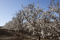 Almendros. agroindustrial ayerbe. productos naturales.
