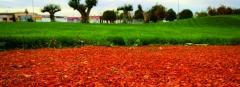 Chamota jardin