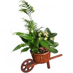 Bonita carretilla de plantas de interior. envía plantas a domicilio en madrid.