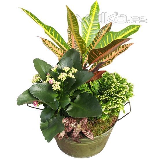Foto cubo de metal con plantas de interior env a plantas for Plantas de interior madrid