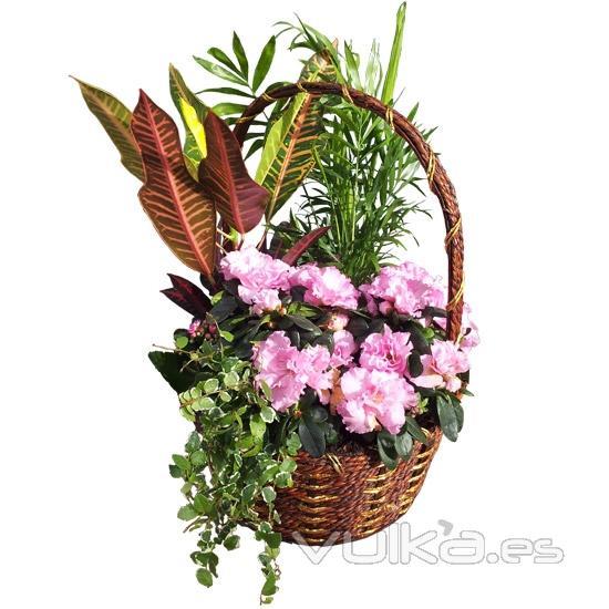 Foto cesta de plantas de interior env a plantas a for Plantas de interior madrid
