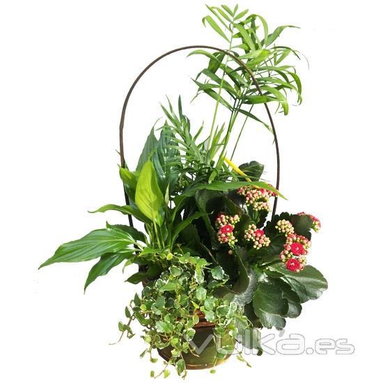 El mercado de las flores for Plantas de interior madrid