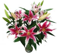 Ramo de liliums orientales. enviar y regalar flores a domicilio con la mejor florister�a online.