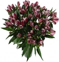 Ramo de alstroemerias. enviar y regalar flores a domicilio con la mejor floristería online.