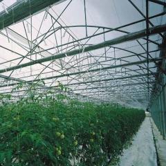 Invernadero mulitcapilla g�tico para cultivo de hortalizas