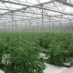 Invernadero multicapilla curvo para cultivo de hortalizas