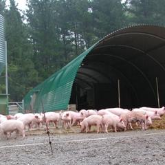 Invernadero ulma  tipo t�nel para granja de animales