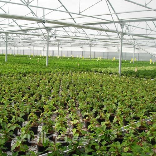 Foto invernadero ulma tipo multicapilla con mesas de cultivo for Mesas de cultivo grandes