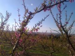 arboles flor