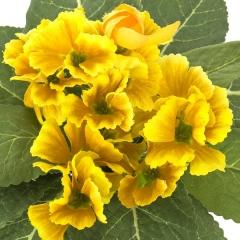 Plantas artificiales con flores. planta primula artificial amarilla en la llimona home (1)