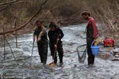 Muestreo de peces con pesca eléctrica autorizada en el río genal (málaga)