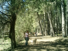 Paseo por el cañón de río lobos