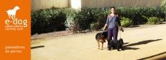 Servicio de paseo de perros a domicilio en alicante