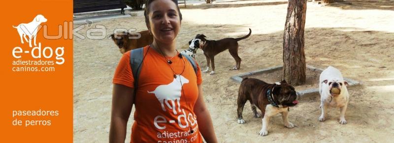Paseadores de perros en Alicante