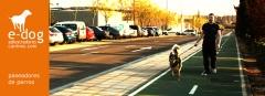 Servicio de paseo de perros a domicilio en zaragoza