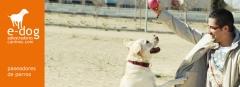 Paseadores de perros en zaragoza