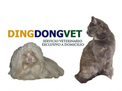 Veterinario a domicilio en madrid